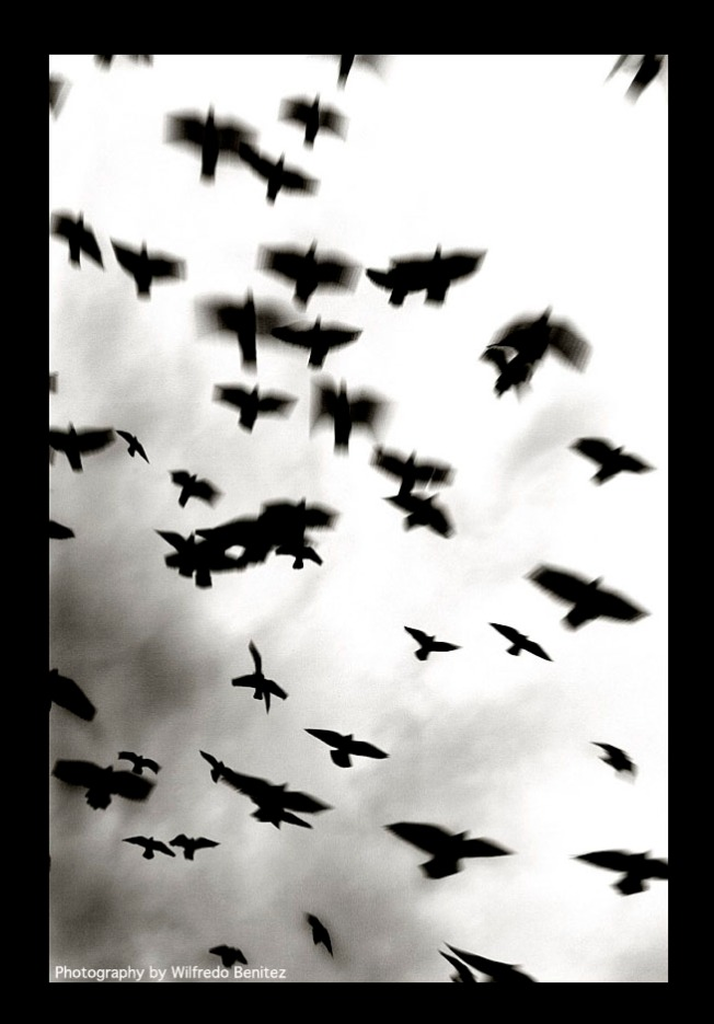 Birds in Flight Corrected copy