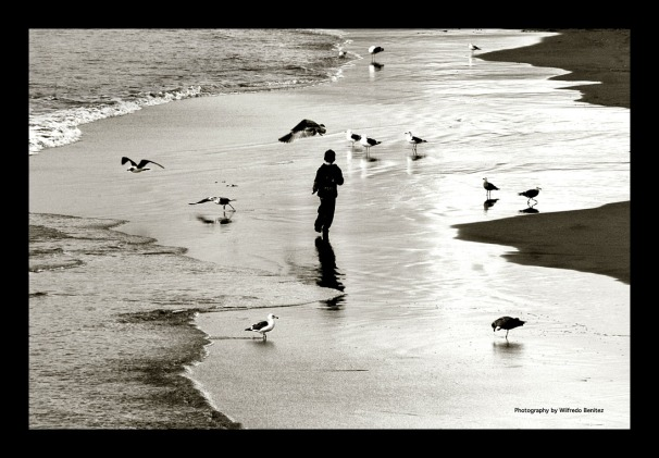 Boy Chasing Seagulls copy