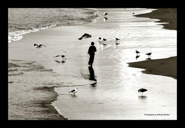 Boy Chasing Seagulls copy