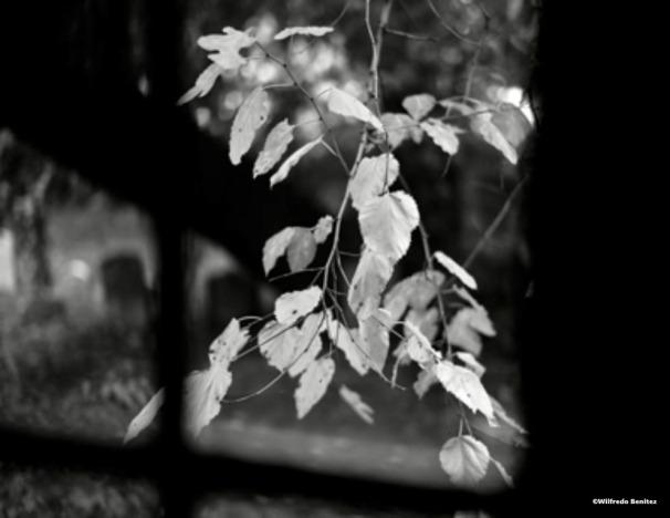 Autumn Leaves-1 copy