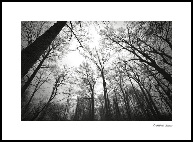 Tree Tops 1 copy